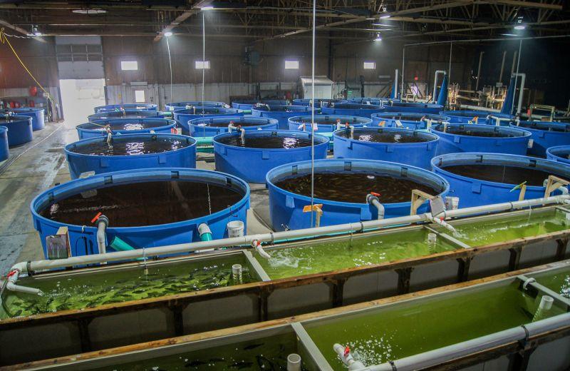 חווה לגידול דגים בניו יורק